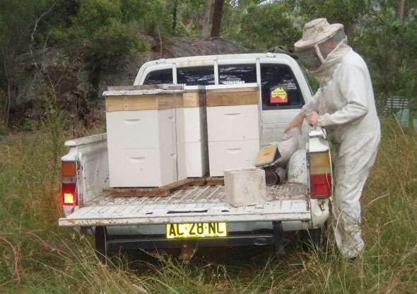 Honeybee Permaculture