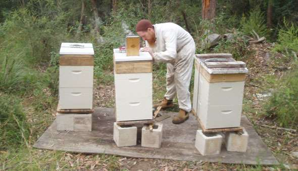Responsible Backyard Beekeeping 16th – 17th February 2013