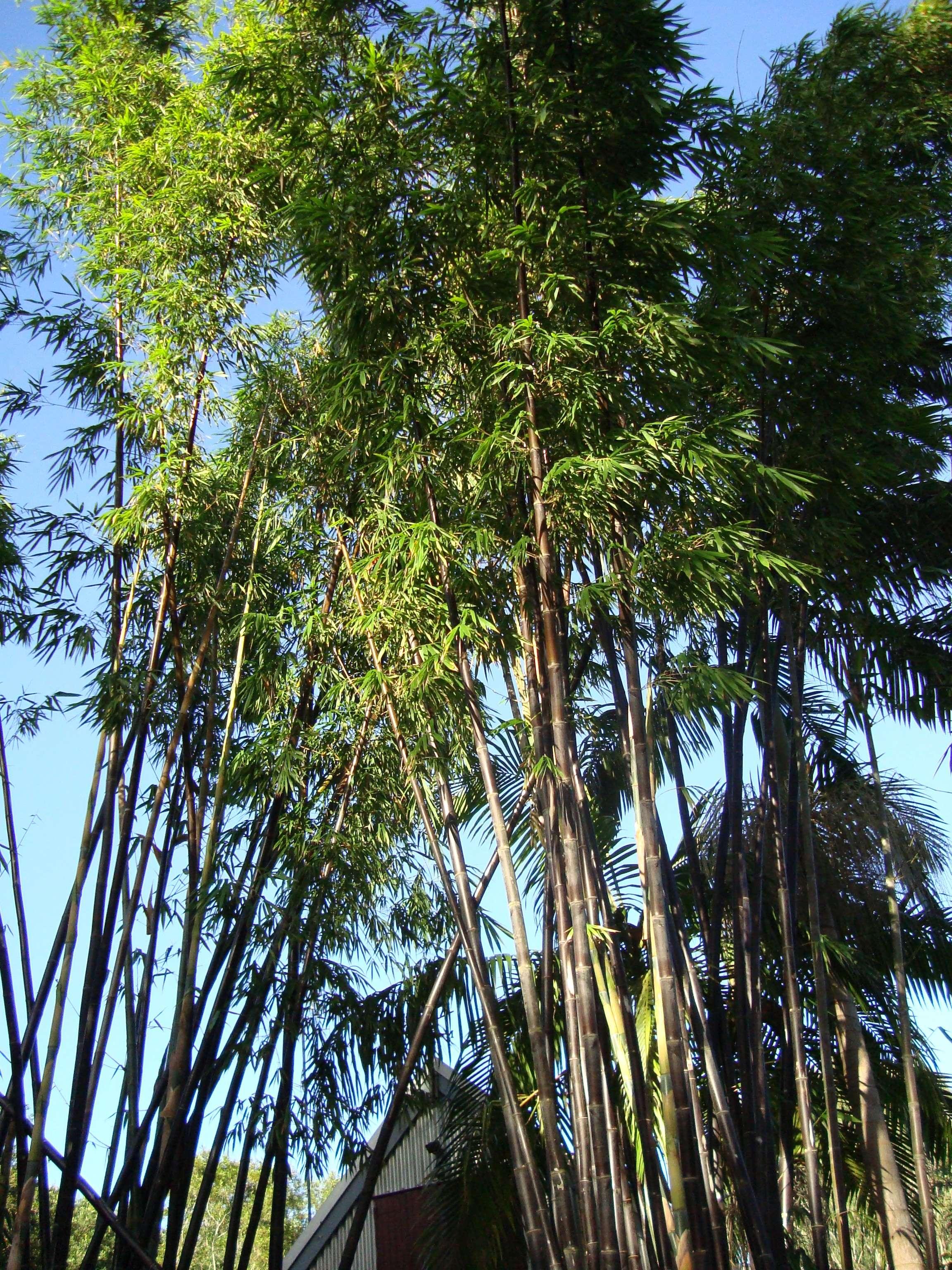 The amazing world of Bamboo
