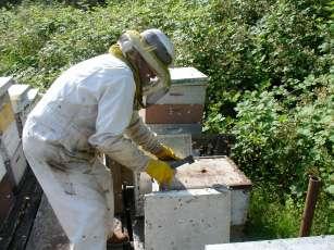 Langstroth-apiary