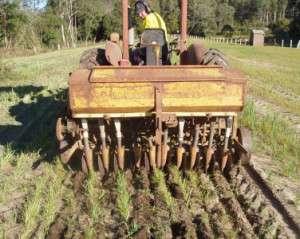 Seeding the paddock