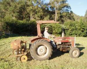 Penny seeding the paddock on the old fergie