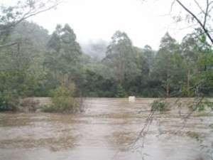 Pecan-trees-in-flood