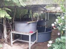 Two-grow-bed-Aquaponics-System