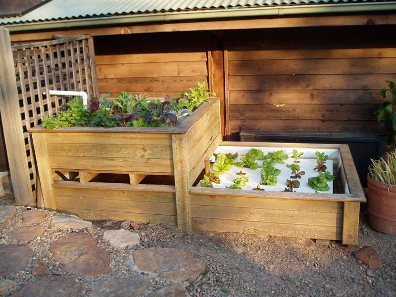 Aquaponics Masterclas and Fruit Tree Workshop News